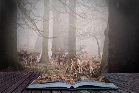12903331-scene-in-magische-buch-von-damwild-weiden-in-nebligen-wald